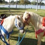 ponies4